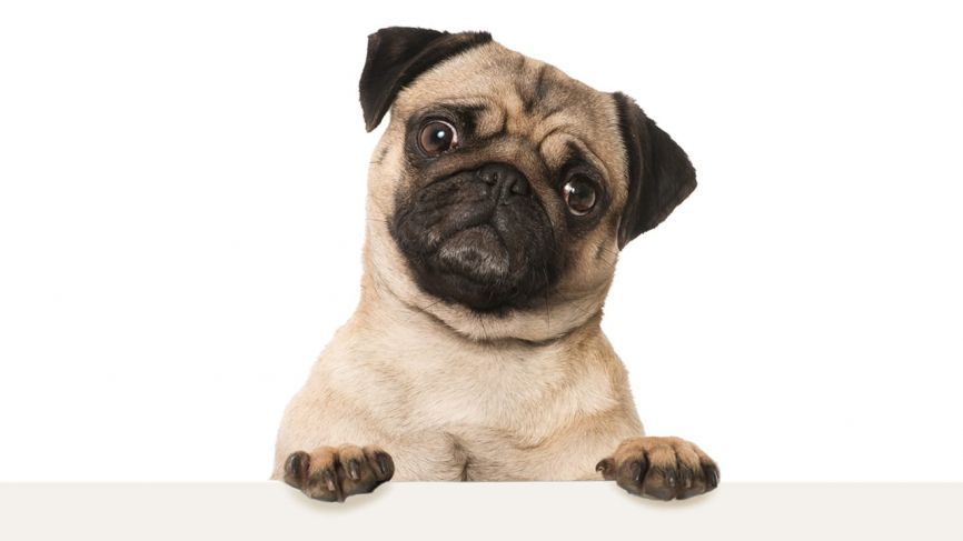 Do you have your PAWS on marketing success?